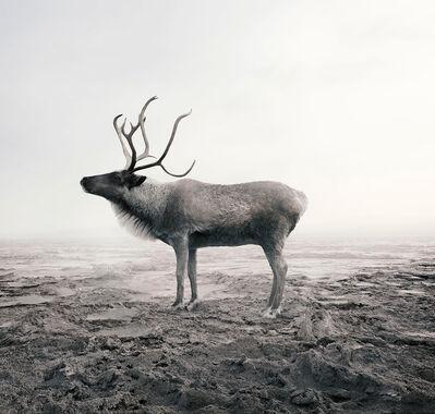 Alice Zilberberg, 'Calm Caribou', 2019