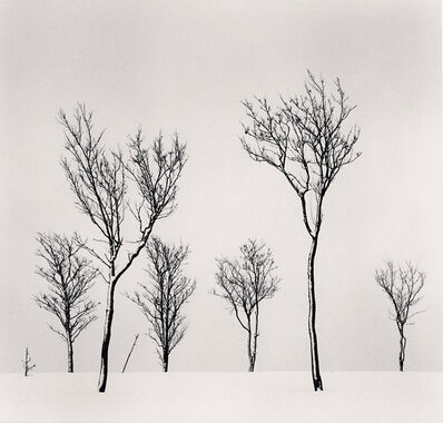Michael Kenna, ' Birch Hill Trees, Hokkaido, Japan', 2020