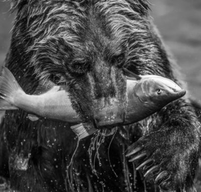 David Yarrow, 'Primeval', 2017