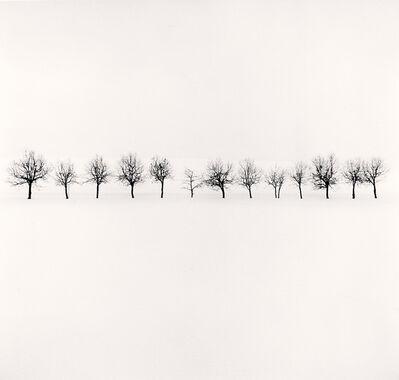 Michael Kenna, 'Fourteen Trees, Higashikawa, Hokkaido, Japan', 2009