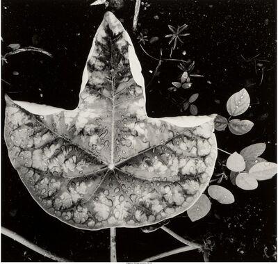 Brett Weston, 'Leaf and Rain Drops (from Hawaii)', 1979