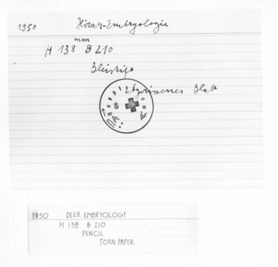 Joseph Beuys, 'Untitled Index Card (#5, Deer Embrology, 1950) ', ca. 1970