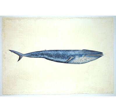 Justin Gibbens, 'Whale Shark', 2013