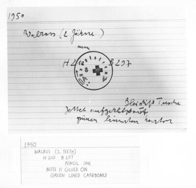 Joseph Beuys, 'Untitled Index Card (#6, Walrus (two teeth), 1950)', ca. 1970