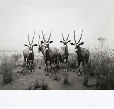 Hiroshi Sugimoto, 'Gemsbok Diorama', 1980