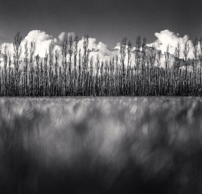 Michael Kenna, 'Poplar Trees and Cumulus Clouds, Kirwee, Canterbury, New Zealand', 2013