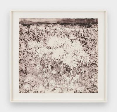 Ruth Asawa, 'Chrysanthemums (TAM.1477-III)', 1965