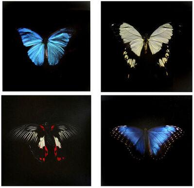 Alexander James Hamilton, 'Swarm (box set)', 2012