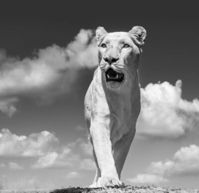 David Yarrow, 'White Mischief ', 2017