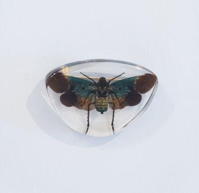 Yuko Katayama, 'Insect No. 2', 2018