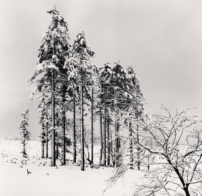 Michael Kenna, ' Ezo Spruce Trees, Hokkaido, Japan', 2020
