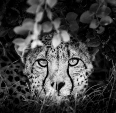 James Lewin, 'The Cheetah and I, Borana, Kenya.', 2019