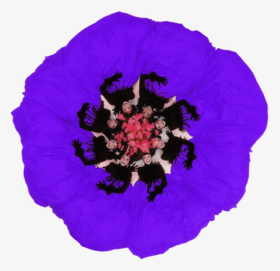Howard Schatz, 'Fashion Flowers:  Purple Petunia', 2006