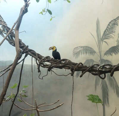 Eric Pillot, 'Hornbill and Fog', 2015