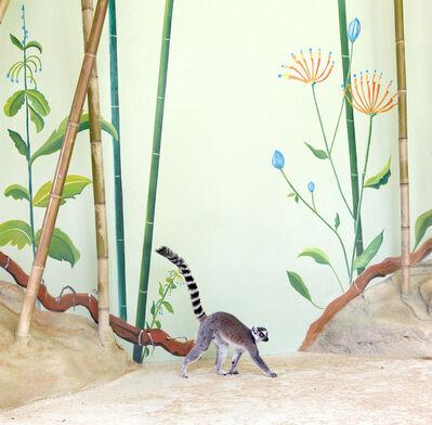 Eric Pillot, 'Lemur and Bamboos'