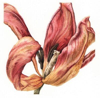 Julia Trickey, 'Enduring Elegance - Desiccated Tulip', 2019