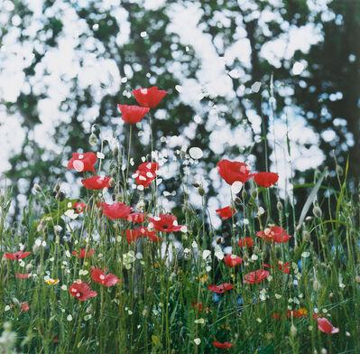 Dianne Bos, 'Ploegsteert Poppies, Falling Stones, Flanders, Belgium', 2014