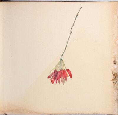 Edgar Honetschläger, 'Peperoncini I', 2018
