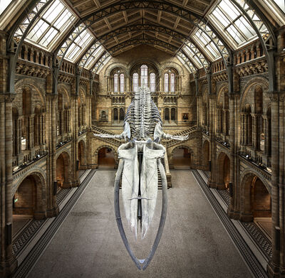 Christian Voigt, 'Balaenoptera Musculus | London, UK', 2018