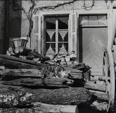 Agnès Varda, 'Chat et rideaux', 1953