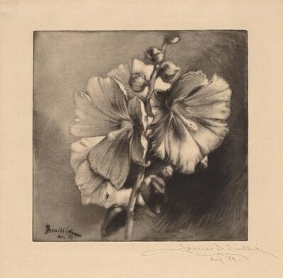 James David Smillie, 'Single Hollyhocks', 1889