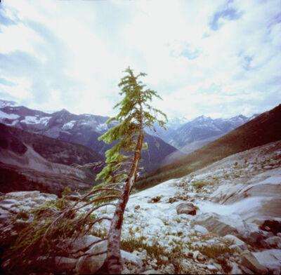 Dianne Bos, 'Lone Tree', 2000