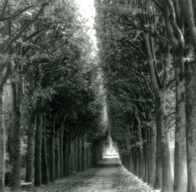 Lynn Geesaman, 'Parc de Sceaux, France (9-06-9-1)', 2006