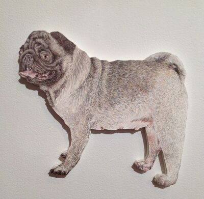 Craig Norton, 'Dog (Pug)', 2013