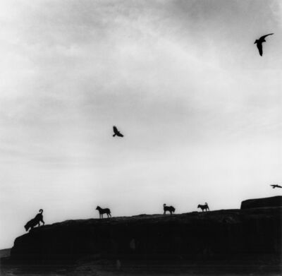 Graciela Iturbide, 'Perros Perdidos, India', 1997