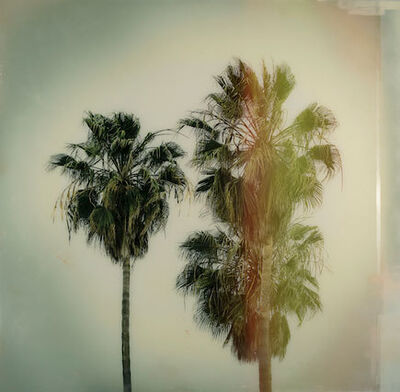Christine Flynn, 'California Palms', 2018
