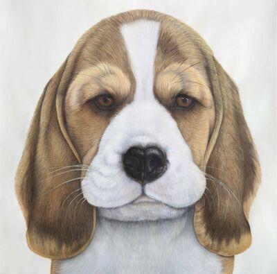Phil Knoll, 'Beagle Pup ', 2019