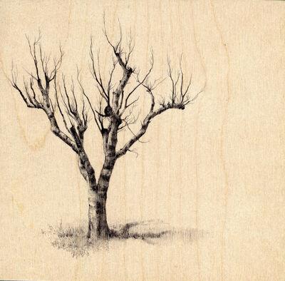 Dina Brodsky, 'Hamilton Tree 2264', 2018
