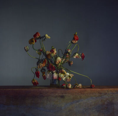 Richard Learoyd, 'Flowers, Day 4', 2019
