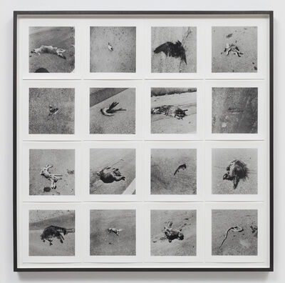 Robert Kinmont, '26 Dead Animals  ', 1967-70/2011