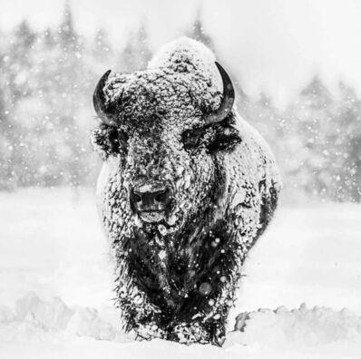 David Yarrow, 'Winter's Coming', 2017-2020