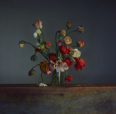 Richard Learoyd, 'Flowers, Day 1', 2019