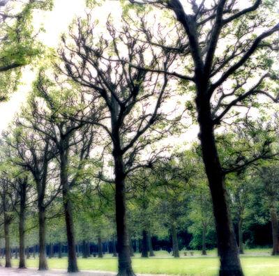 Lynn Geesaman, 'Parc de Sceaux, France (4-07-5c-4)', 2007