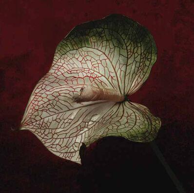 Christine Mathieu, 'Les veines de Monsieur Shinpachi', 2011
