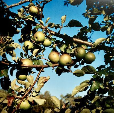 Peter Brown, 'Baldwin apples, Heath, Massachusetts.', 2000 -Printed 2001