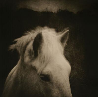 Lara Porzak, 'Bucephalus, The Camarge', 2002
