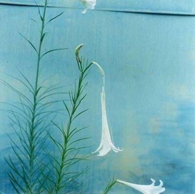 Rinko Kawauchi, 'Untitled (A131) from the series AILA', 2011