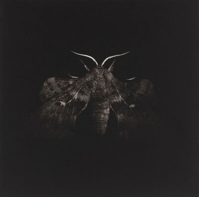 Sarah Gillespie, 'Poplar Hawk Moth', 2019
