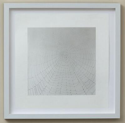 Sally Gall, 'Web', 2010