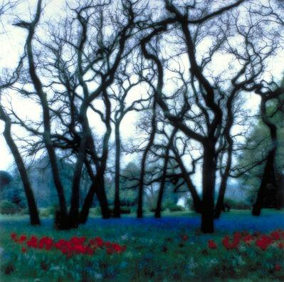 Lynn Geesaman, 'Bagatelle, Paris, France (5-95-15c-12)', 1995