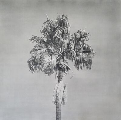 Clay Wagstaff, 'Palms no. 12', 2016