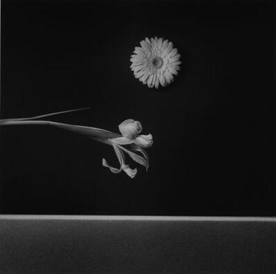Robert Mapplethorpe, 'Iris and Zinnia, 1984', 1984