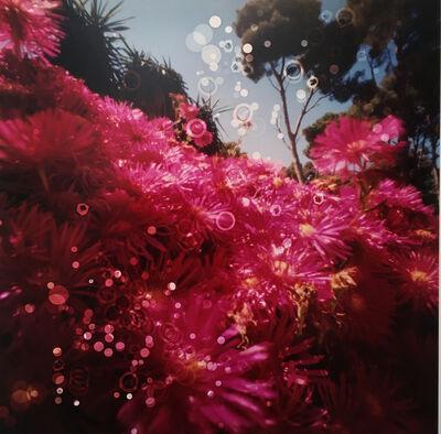 Dianne Bos, 'Cactus Flowers11, Cap Roig Botanical Garden, Spain', 2019