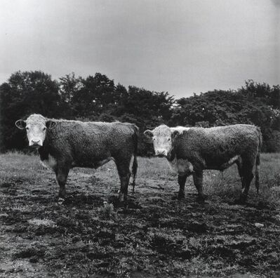 Peter Hujar, 'Butch and Buster', 1978