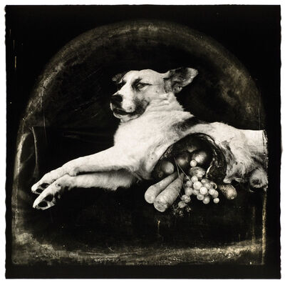 Joel-Peter Witkin, 'The Result of War- The Cornucopian Dog, NM', 1984