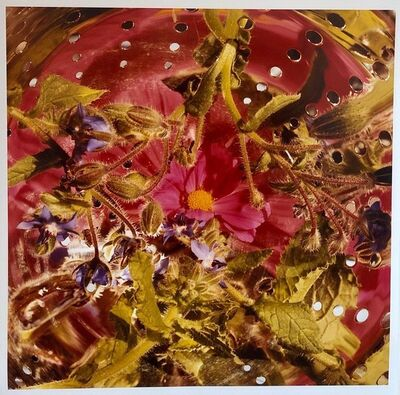 Peter C. Jones, 'Conundrum, Floral Large Format Photo 24X20 Color Photograph Beach House RI', 2000-2009
